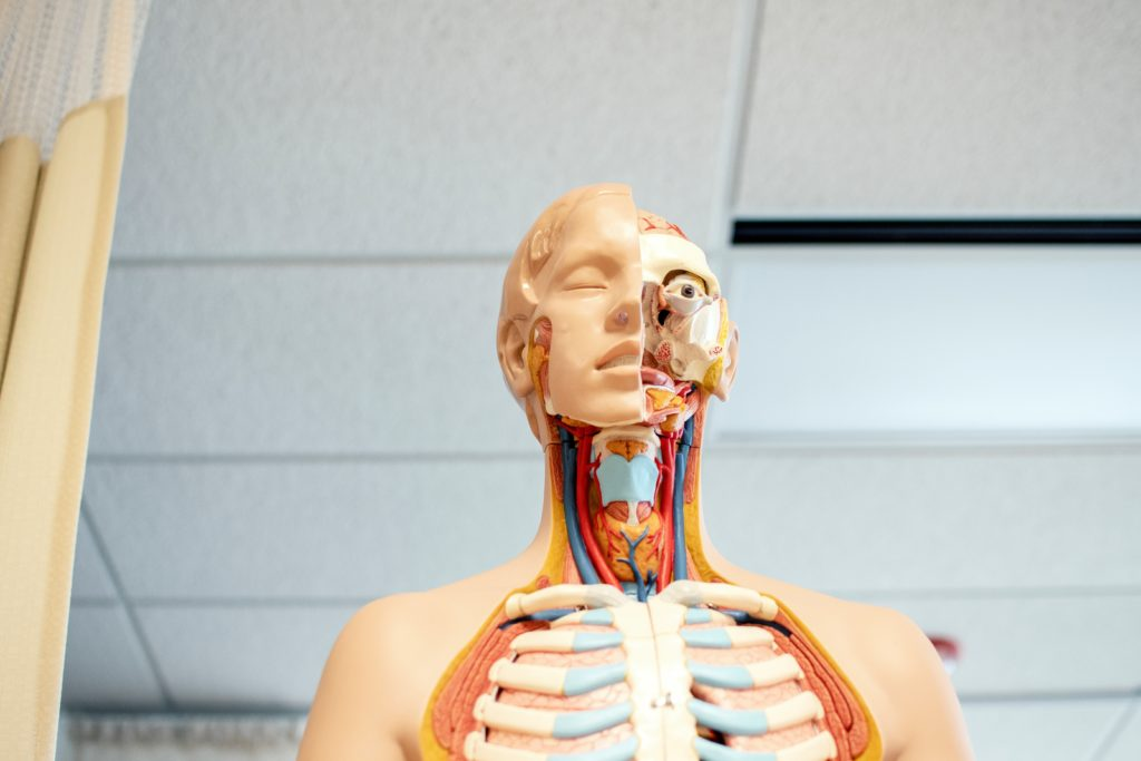 anatomical human medical body figure